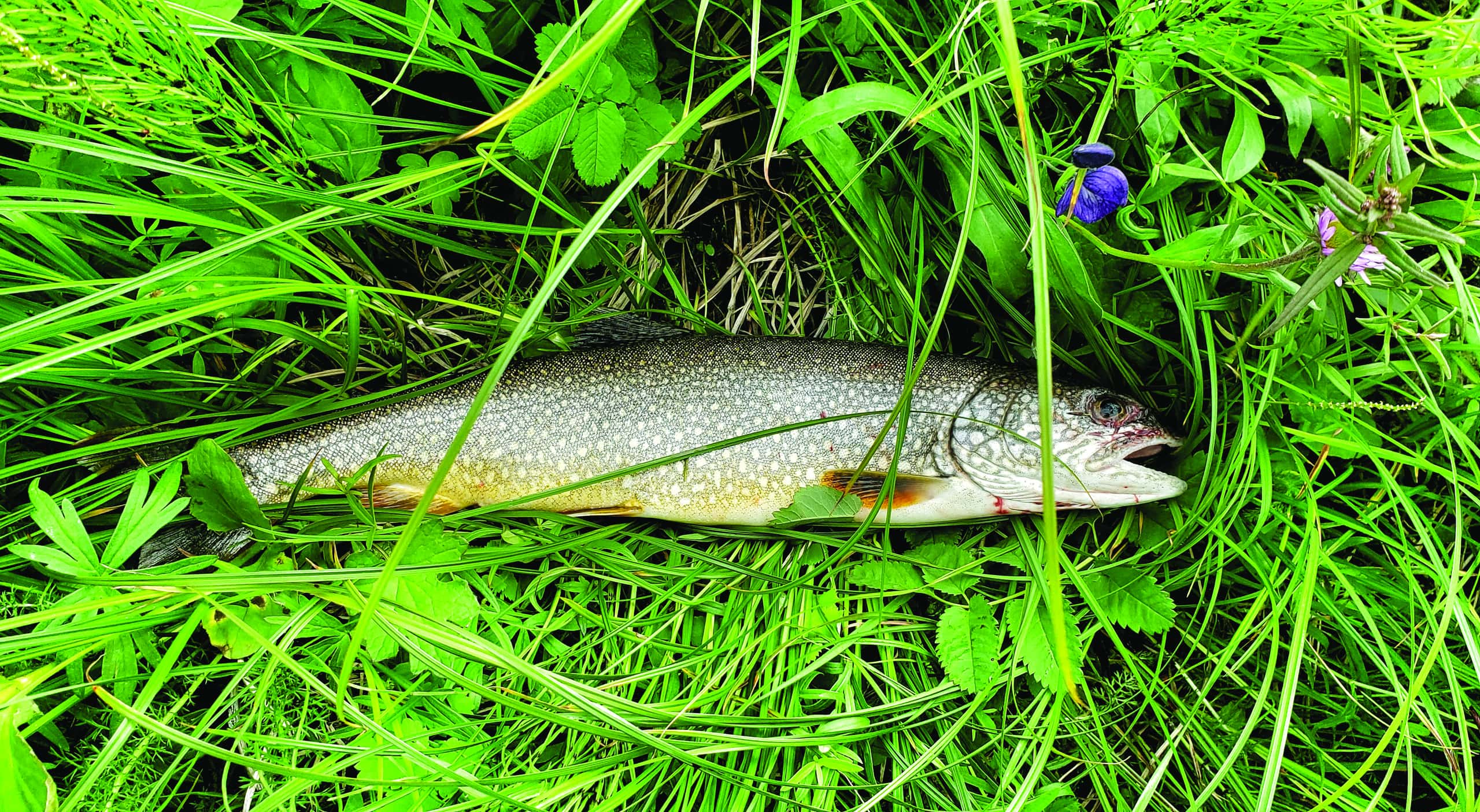 Fish This – Weathering the storm