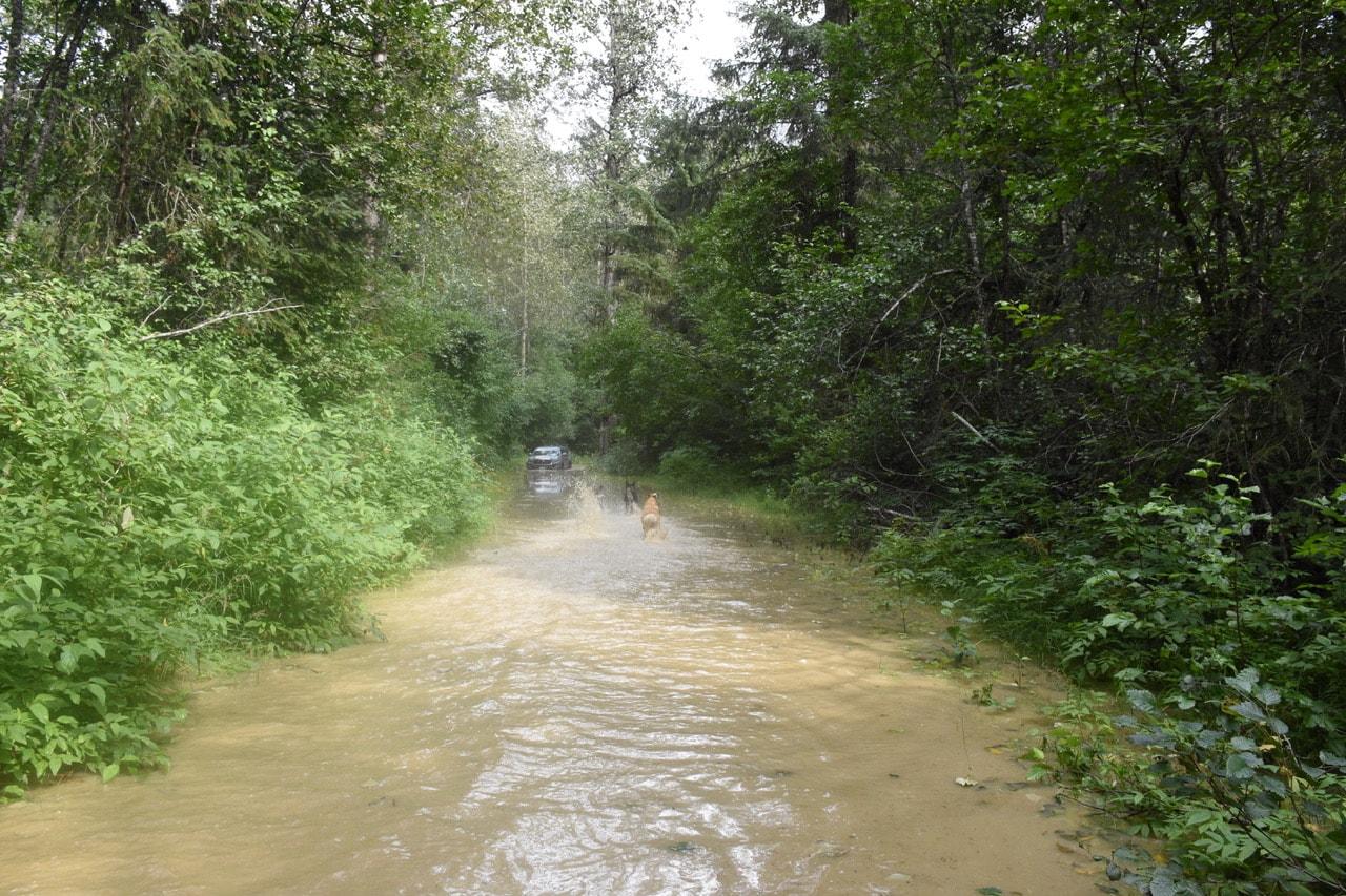 River wreaks havoc in Dyea